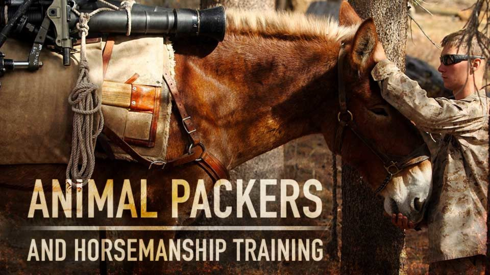 Horsemanship Training And Animal Packers