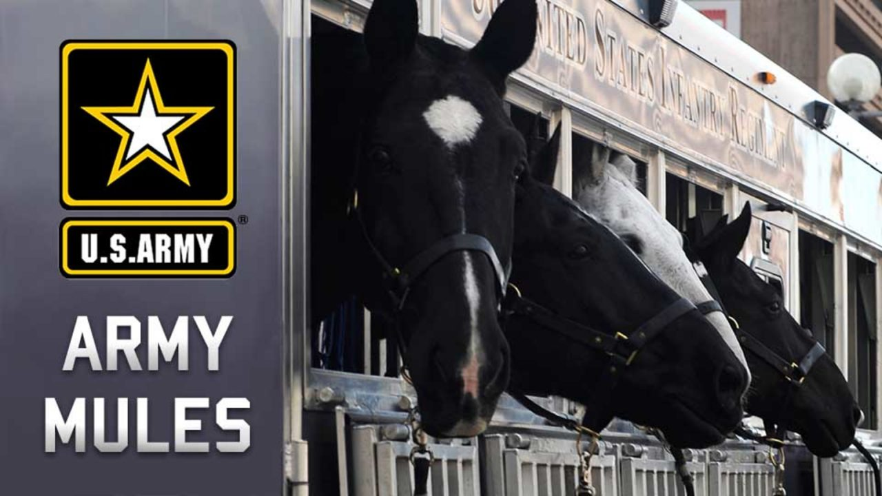 Army Mules