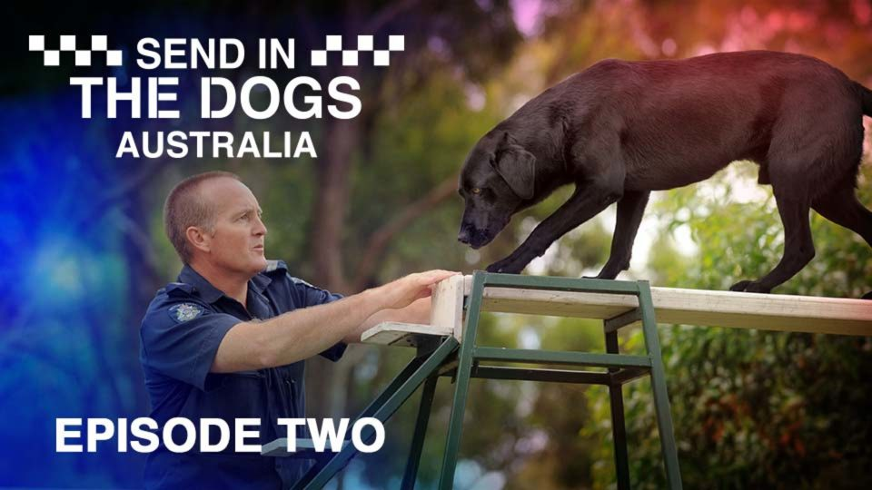 Send In The Dogs Australia – Episode 2