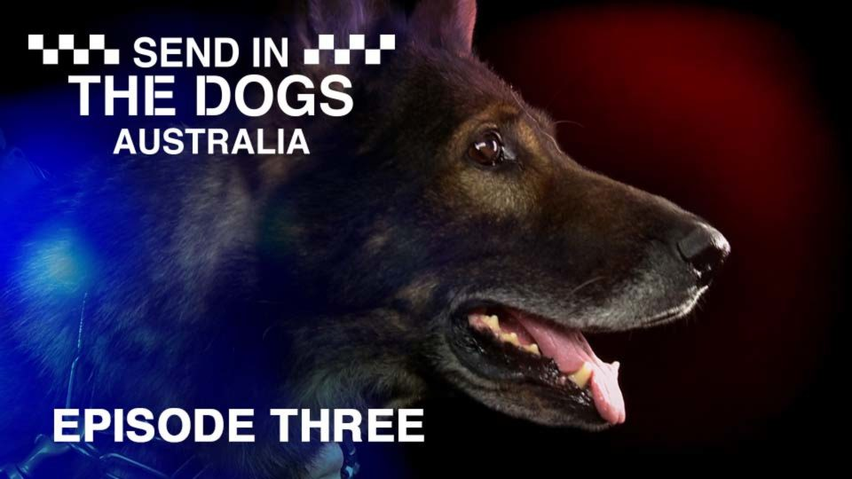 Send In The Dogs Australia – Episode 3