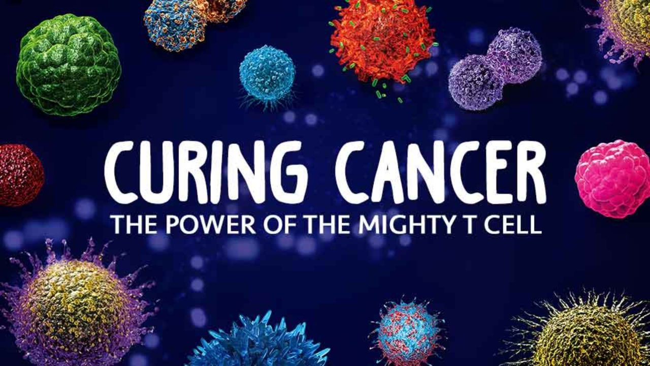 Curing Cancer- The Power Of The Mighty T Cell