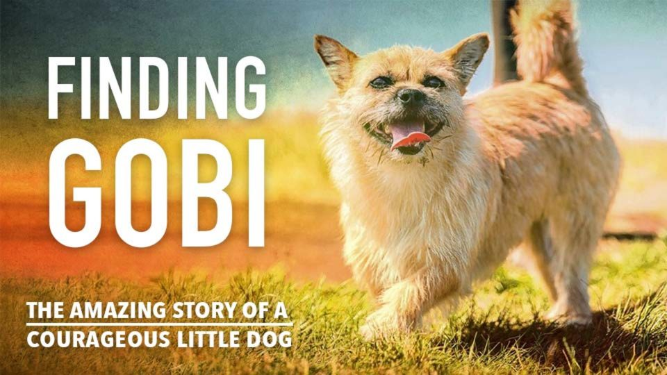 Finding Gobi – The Amazing Story Of A Courageous Little Dog