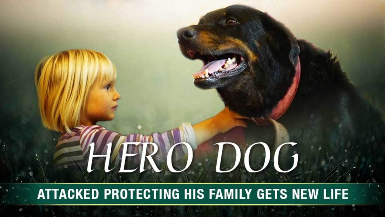 Hero Dog Brutally Attacked Protecting his Family gets New Life