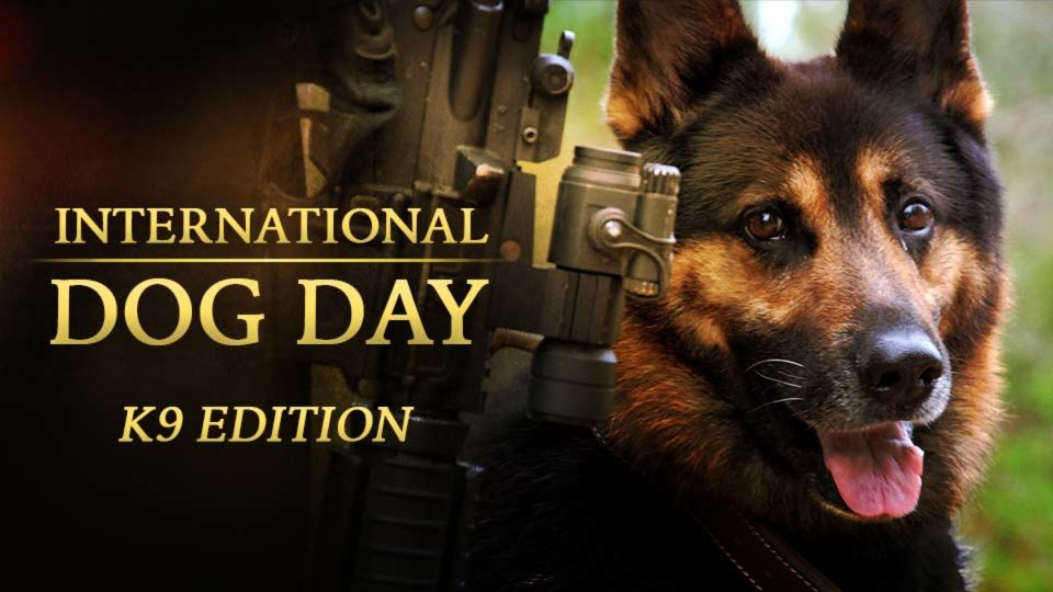 International Dog Day: K9 Edition