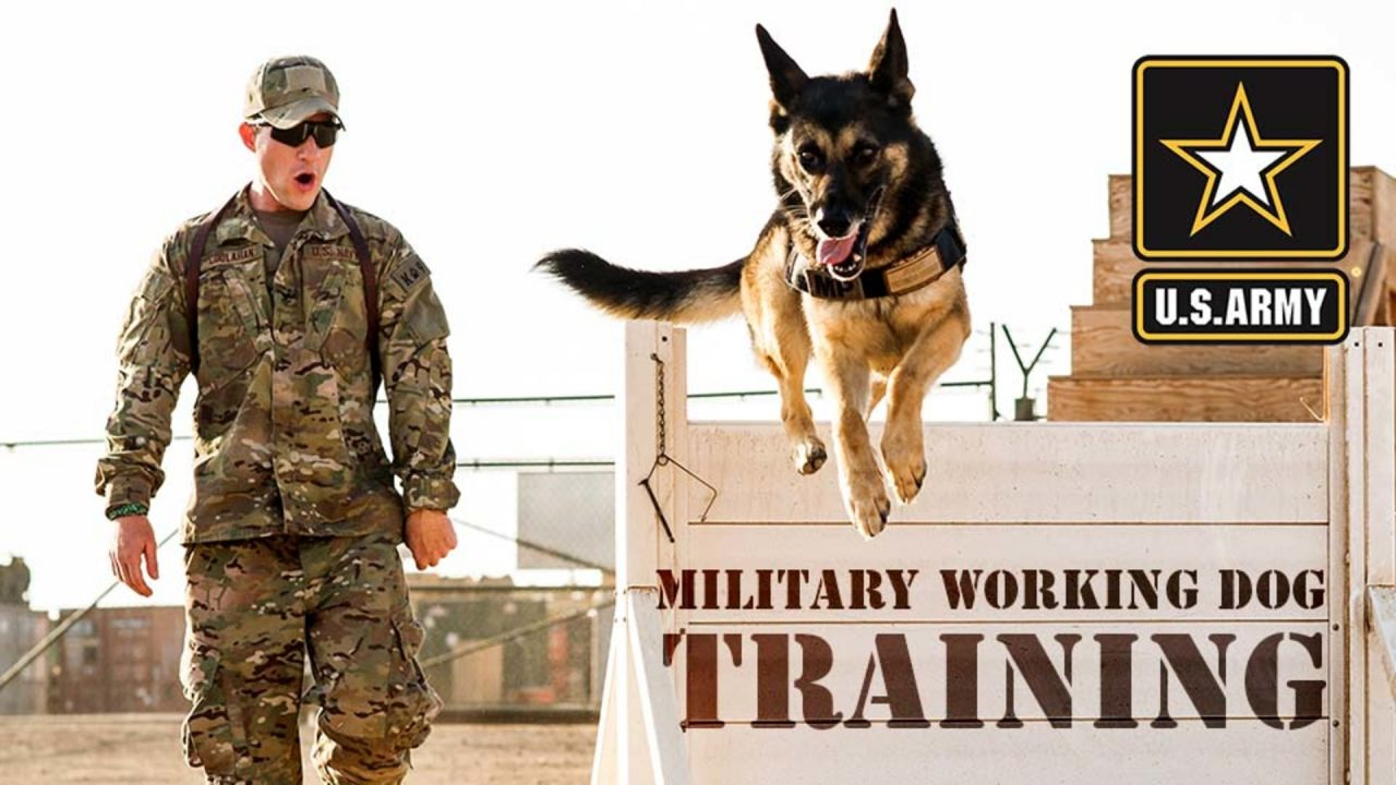 Military Working Dog Training