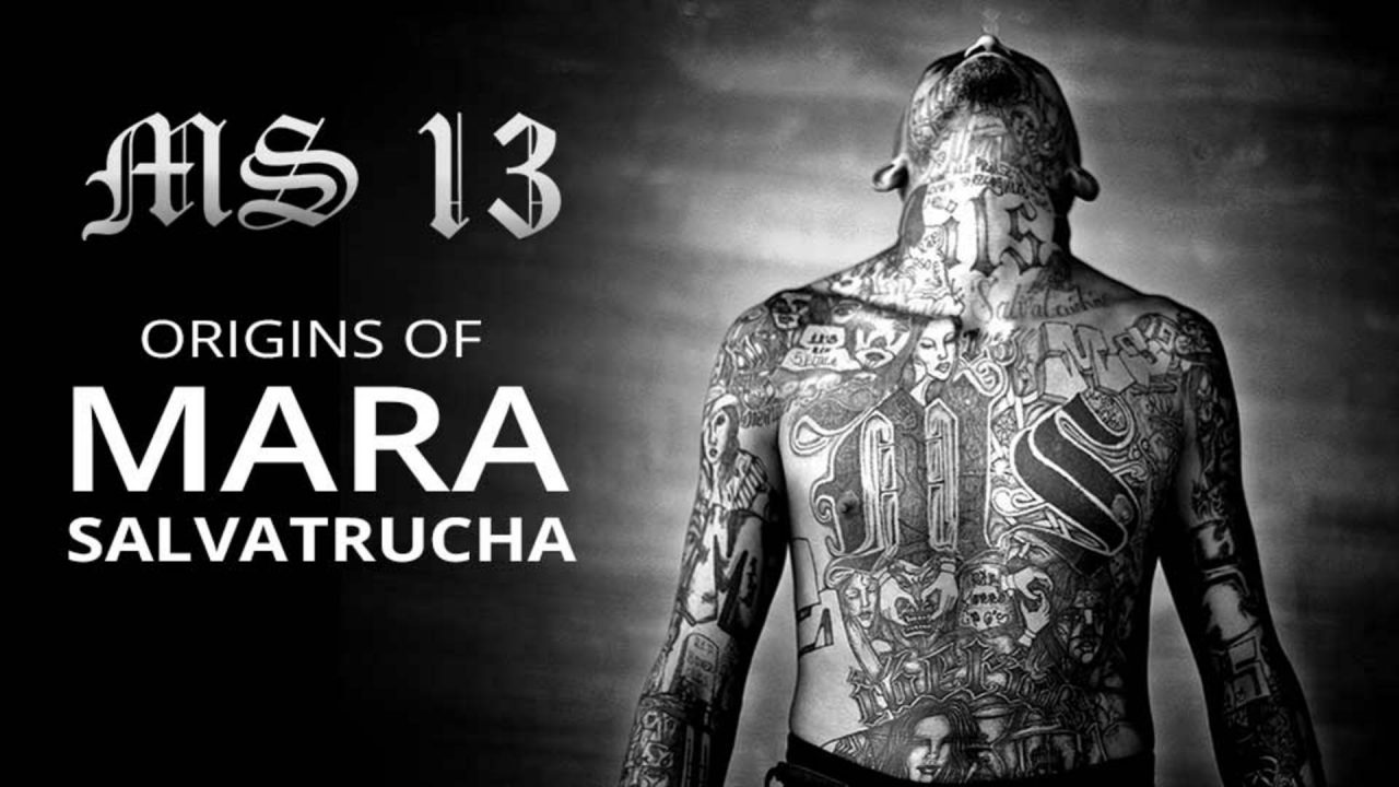 MS 13 – Origins of Mara Salvatrucha