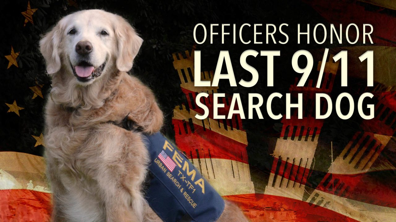 Officers Honor Last 911 Search Dog With Moving Tribute Before Being Put Down.mp4