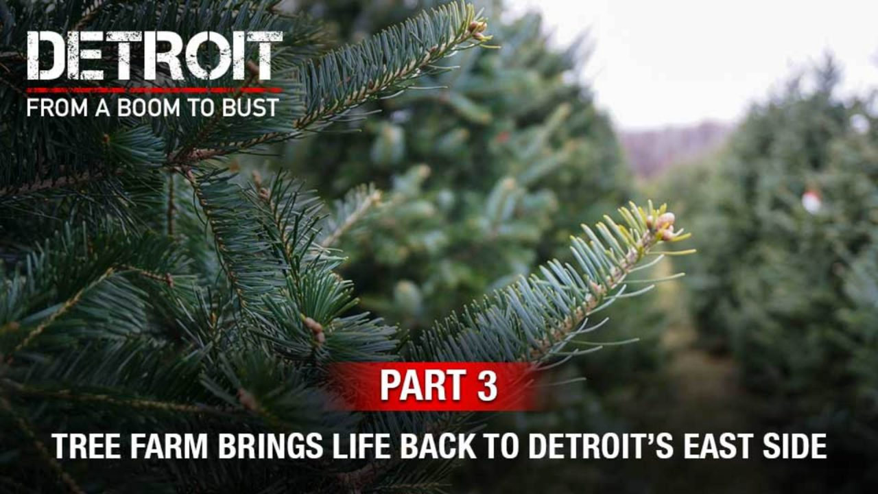 Part 3: This Tree Farm Is Bringing Life Back To Detroit's East Side