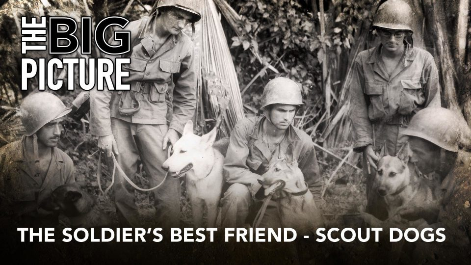 The Big Picture: The Soldier's Best Friend – Scout Dogs