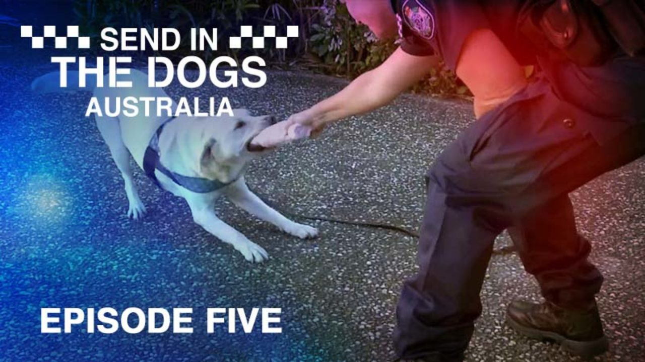 Send In The Dogs Australia – Episode 5