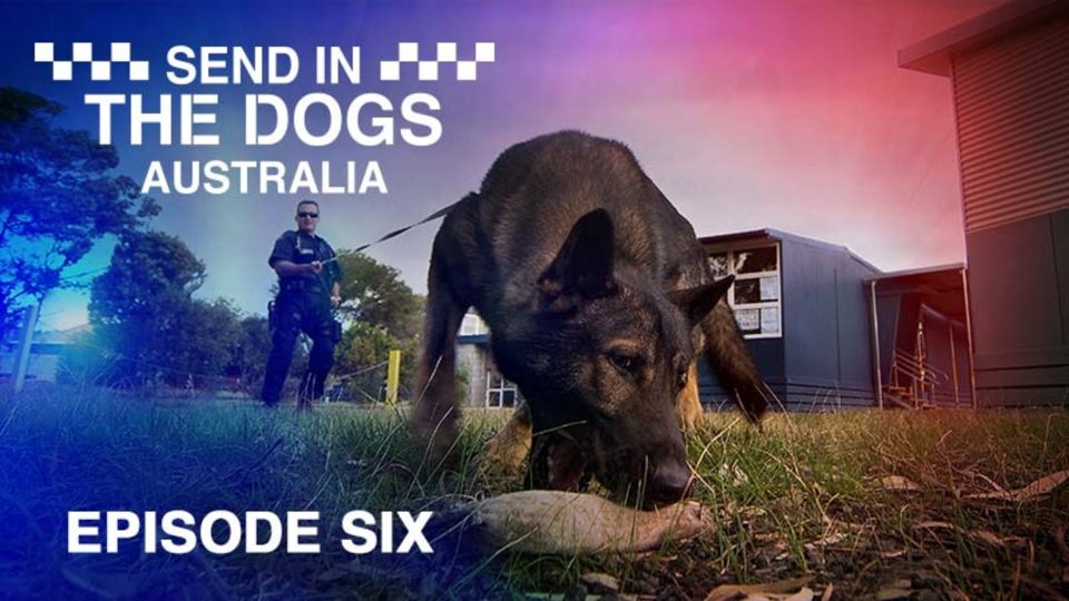 Send In The Dogs Australia – Episode 6