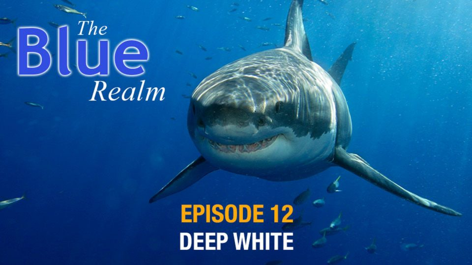 The Blue Realm – Deep White