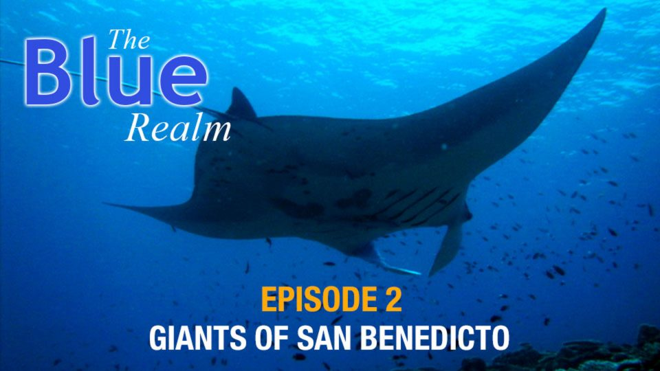 The Blue Realm – Giants of San Benedicto