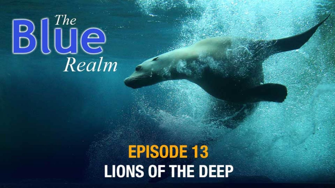 The Blue Realm – Lions of the Deep