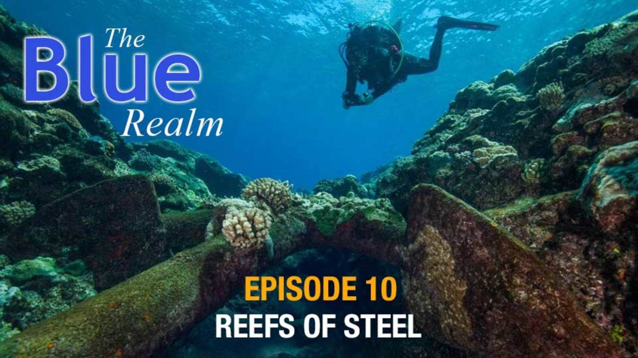 The Blue Realm – Reefs of Steel