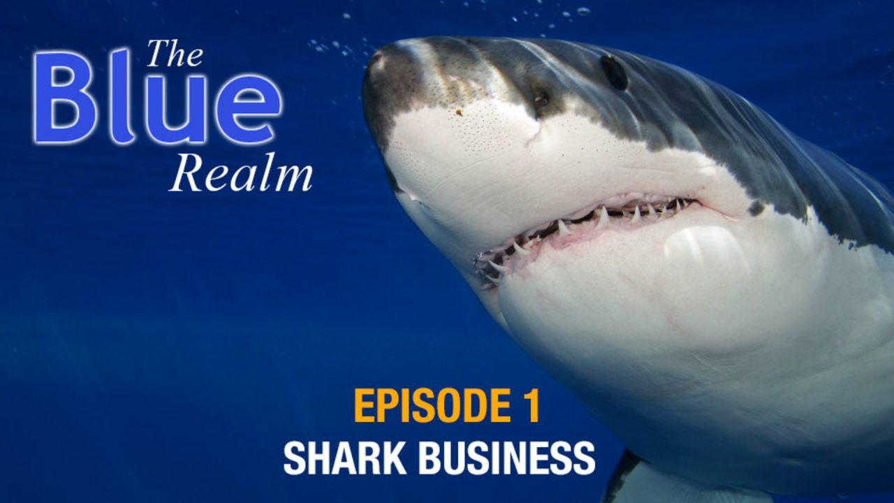 The Blue Realm – Shark Business