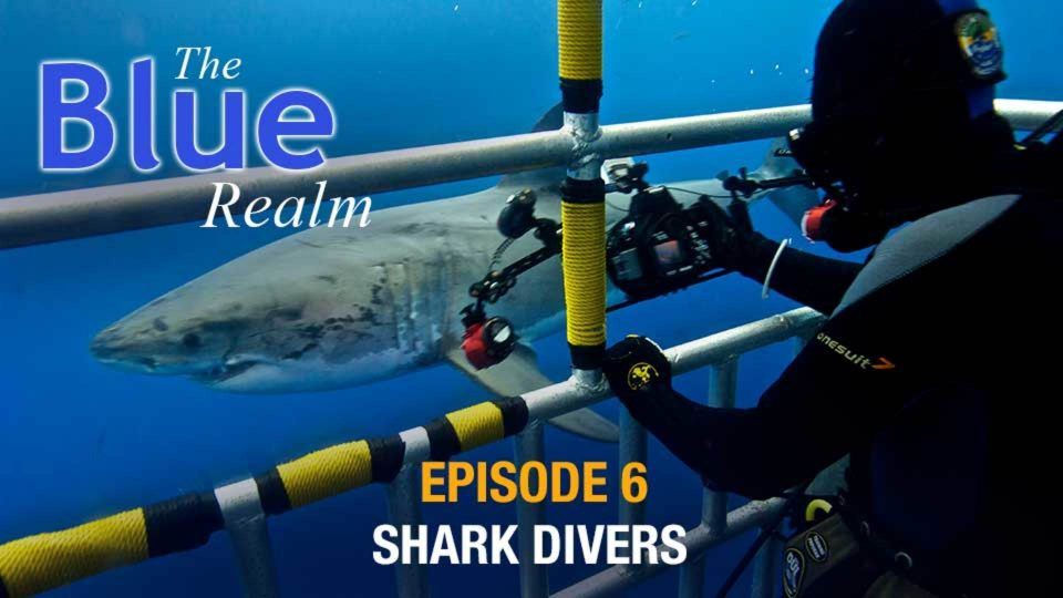 The Blue Realm – Shark Divers
