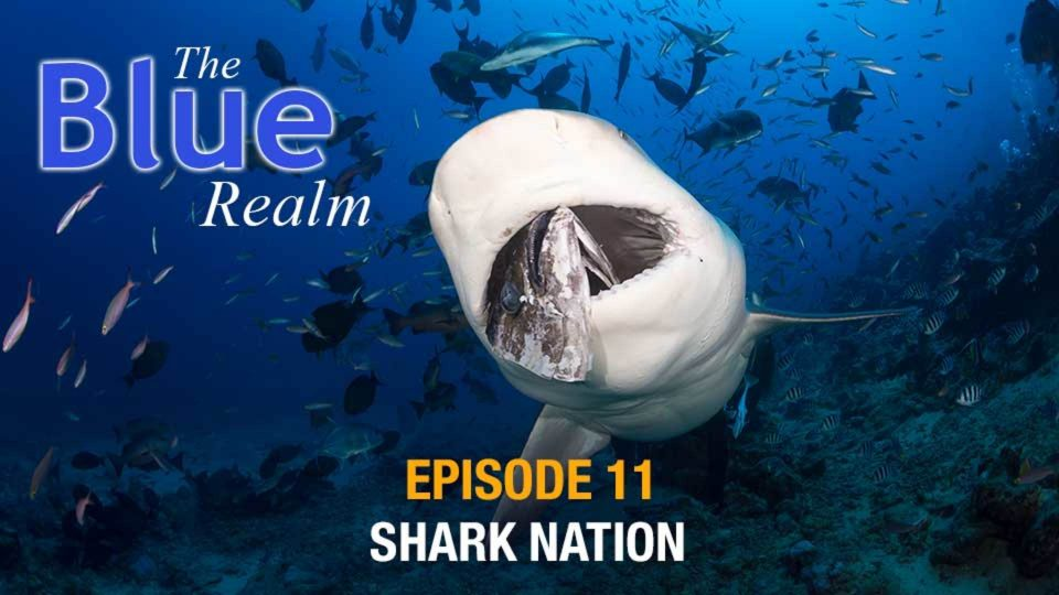 The Blue Realm – Shark Nation