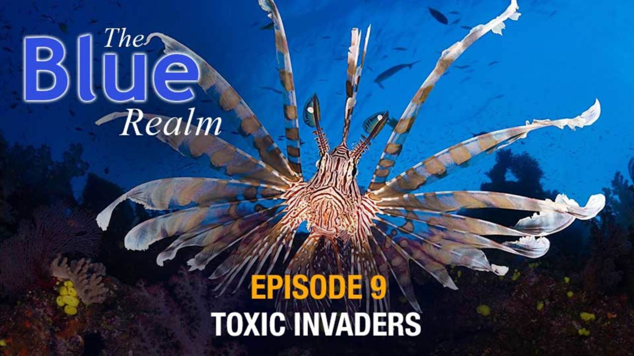 The Blue Realm – Toxic Invaders