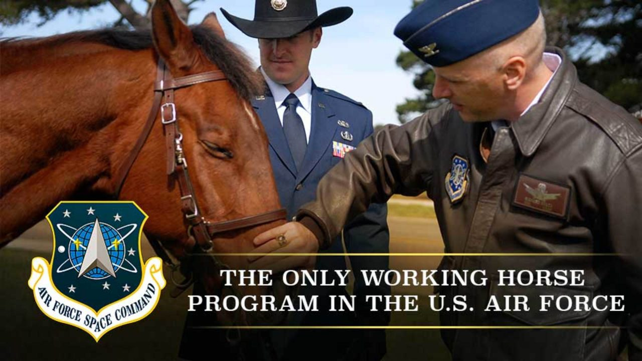 The Only Working Horse Program In The U.S. Air Force!