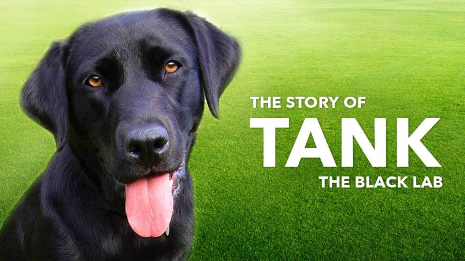 The Story of Tank the Black Lab