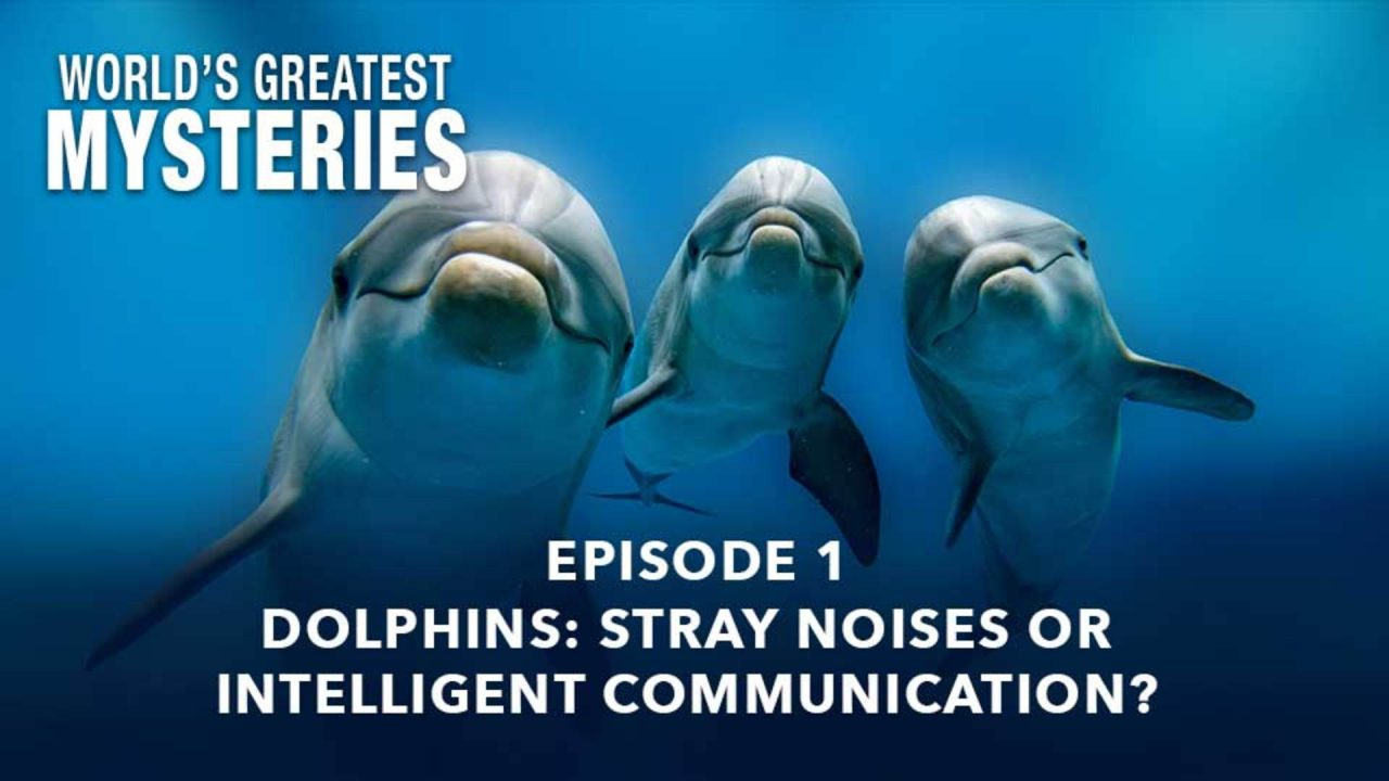 World's Greatest Mysteries – Dolphins: Stray Noises or Intelligent Communication