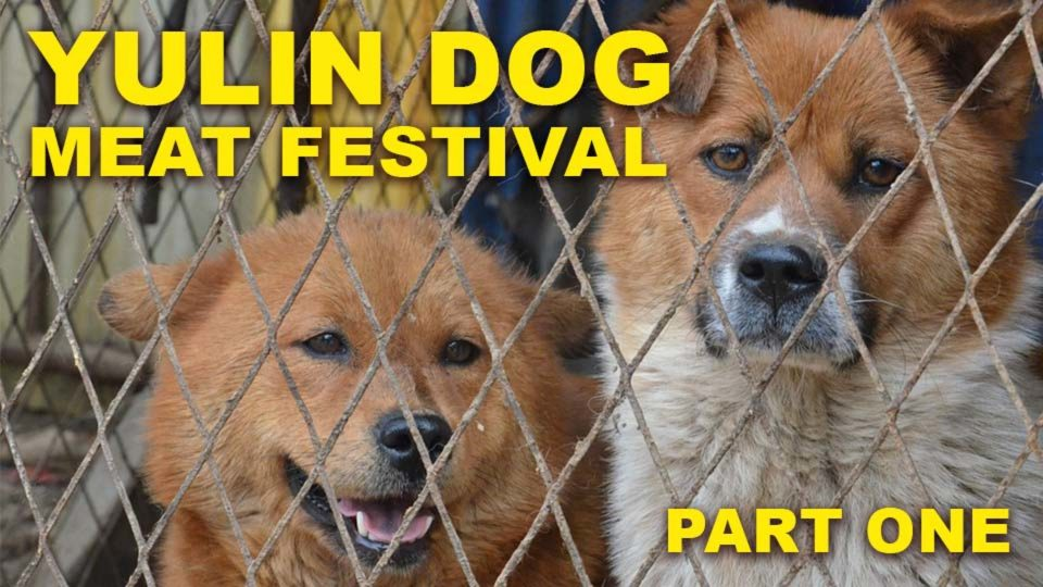 Yulin Dog Barbaric Festival – Part 1