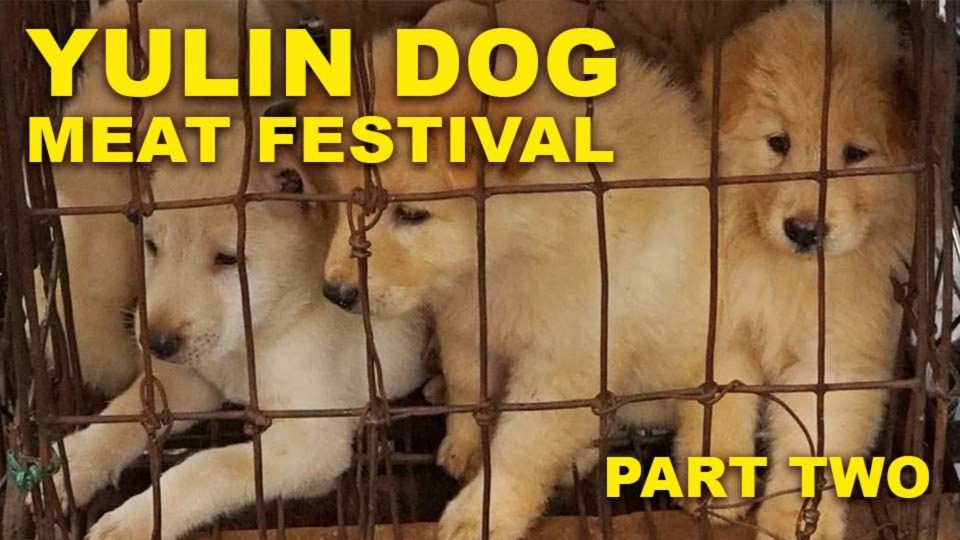 Yulin Dog Barbaric Festival – Part 2